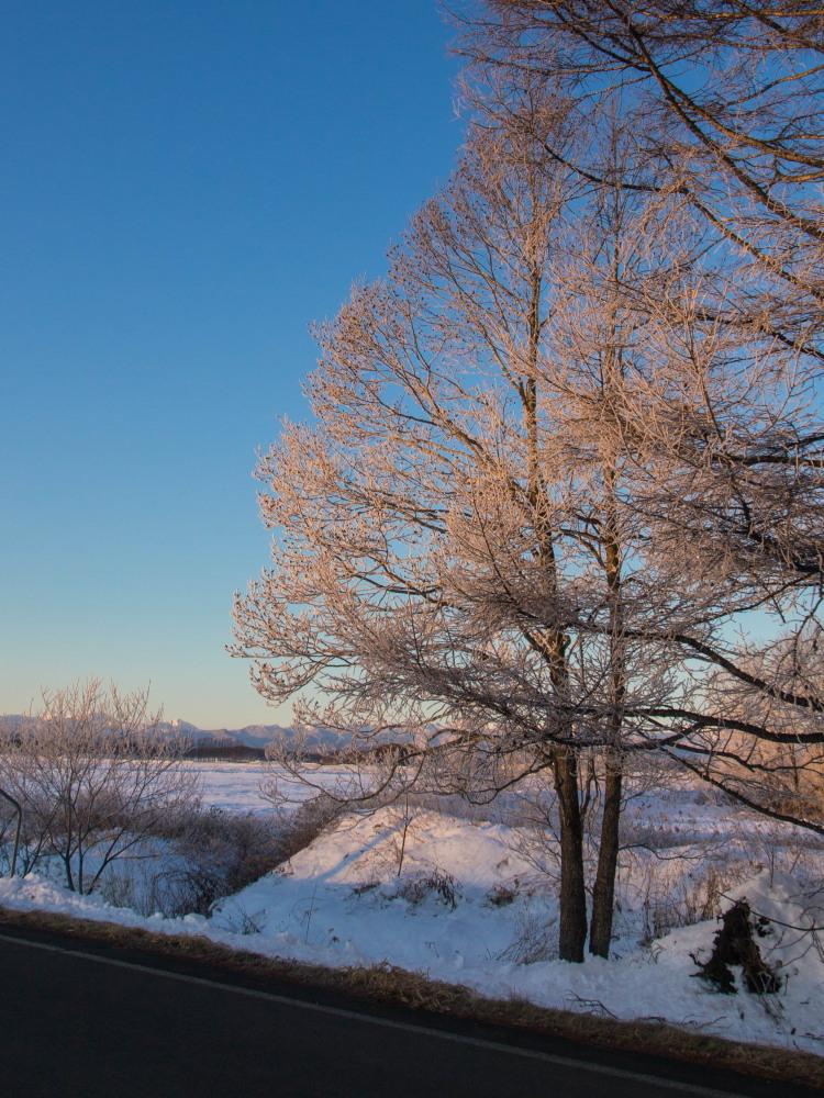 今年もあと3日・・「霧氷ツアー」が先日から始まっています。_f0276498_11090183.jpg