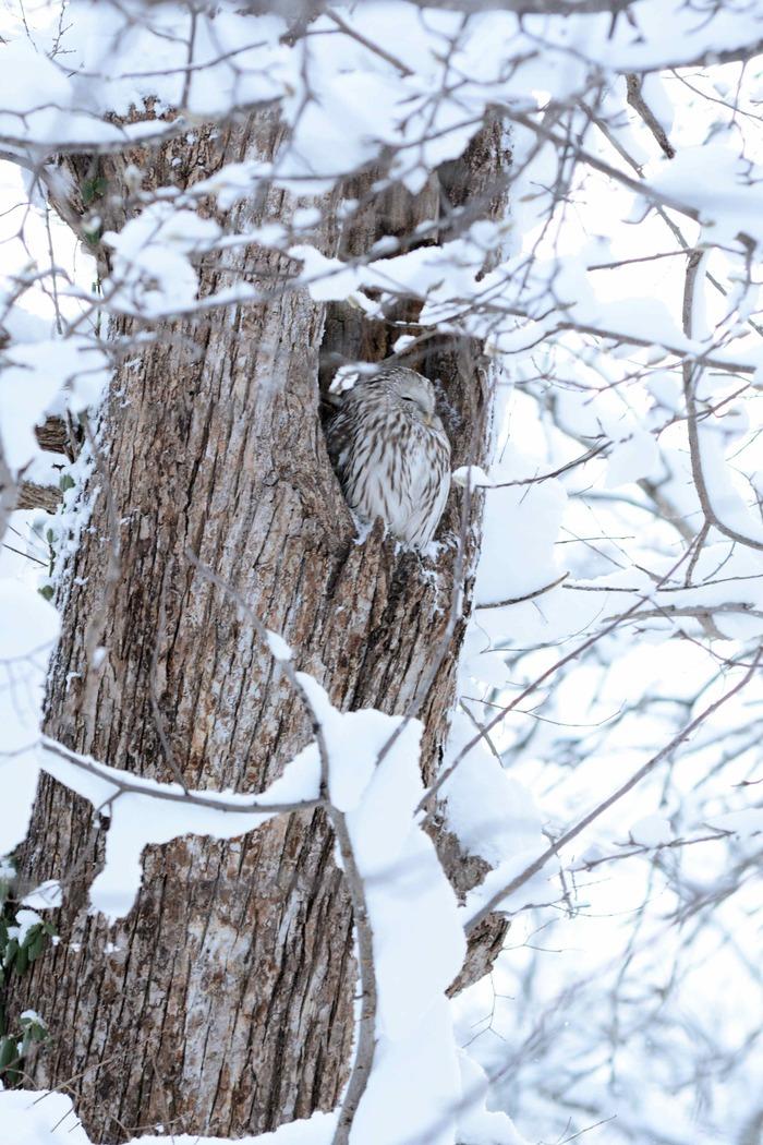 北の森からエゾリスと野鳥便り _d0098721_20354971.jpg