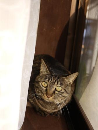 猫のお友だち ハナちゃんタマちゃん編。_a0143140_21384874.jpg