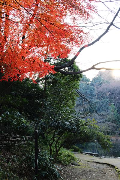 Hello from Tokyo 12 東京大学本郷校舎_a0003650_21322950.jpg