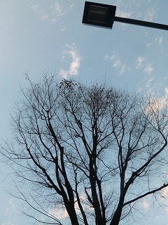 happy time   片付けの風景_a0165160_21462298.jpg