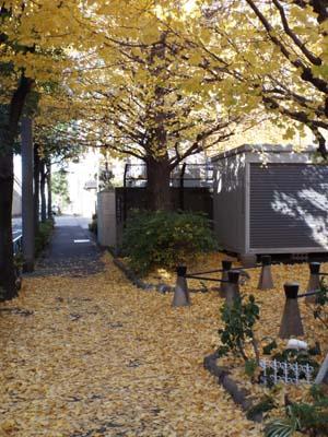 宮本三郎記念館と九品仏まで見たこと_f0211178_14213430.jpg