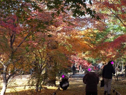 宮本三郎記念館と九品仏まで見たこと_f0211178_1422248.jpg