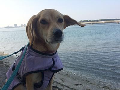 浜名湖へ_d0207298_12102955.jpg
