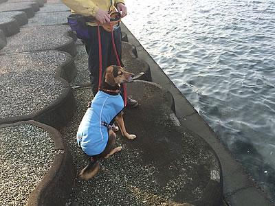 浜名湖へ_d0207298_12122152.jpg