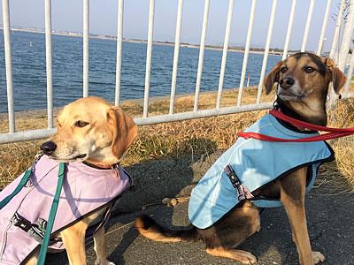 浜名湖へ_d0207298_1243567.jpg