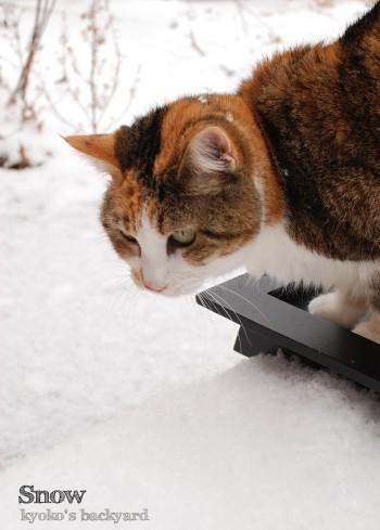雪をみた猫の反応 2_b0253205_05345208.jpg