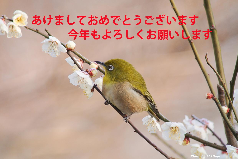 f0003418_18442136.jpg