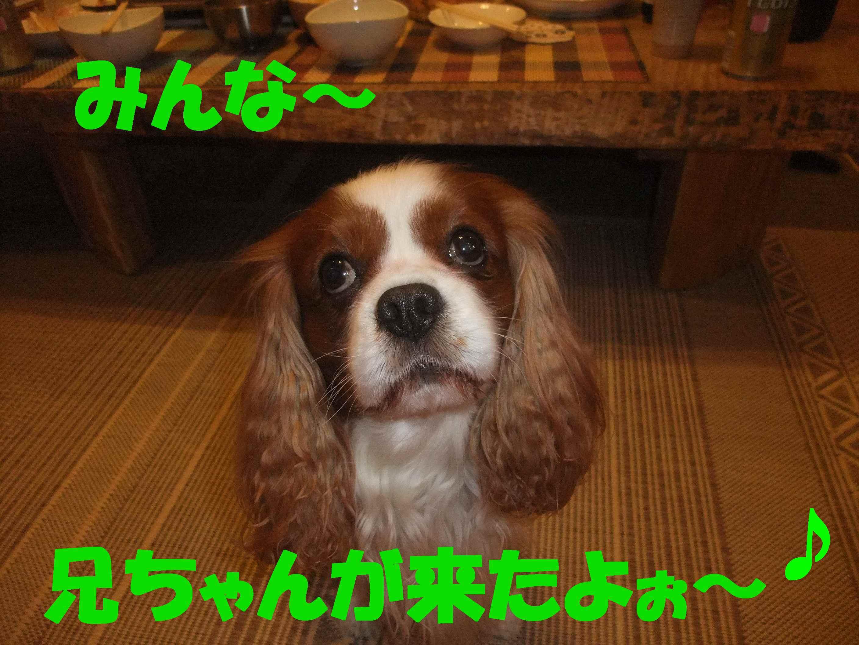 b0165139_20143224.jpg