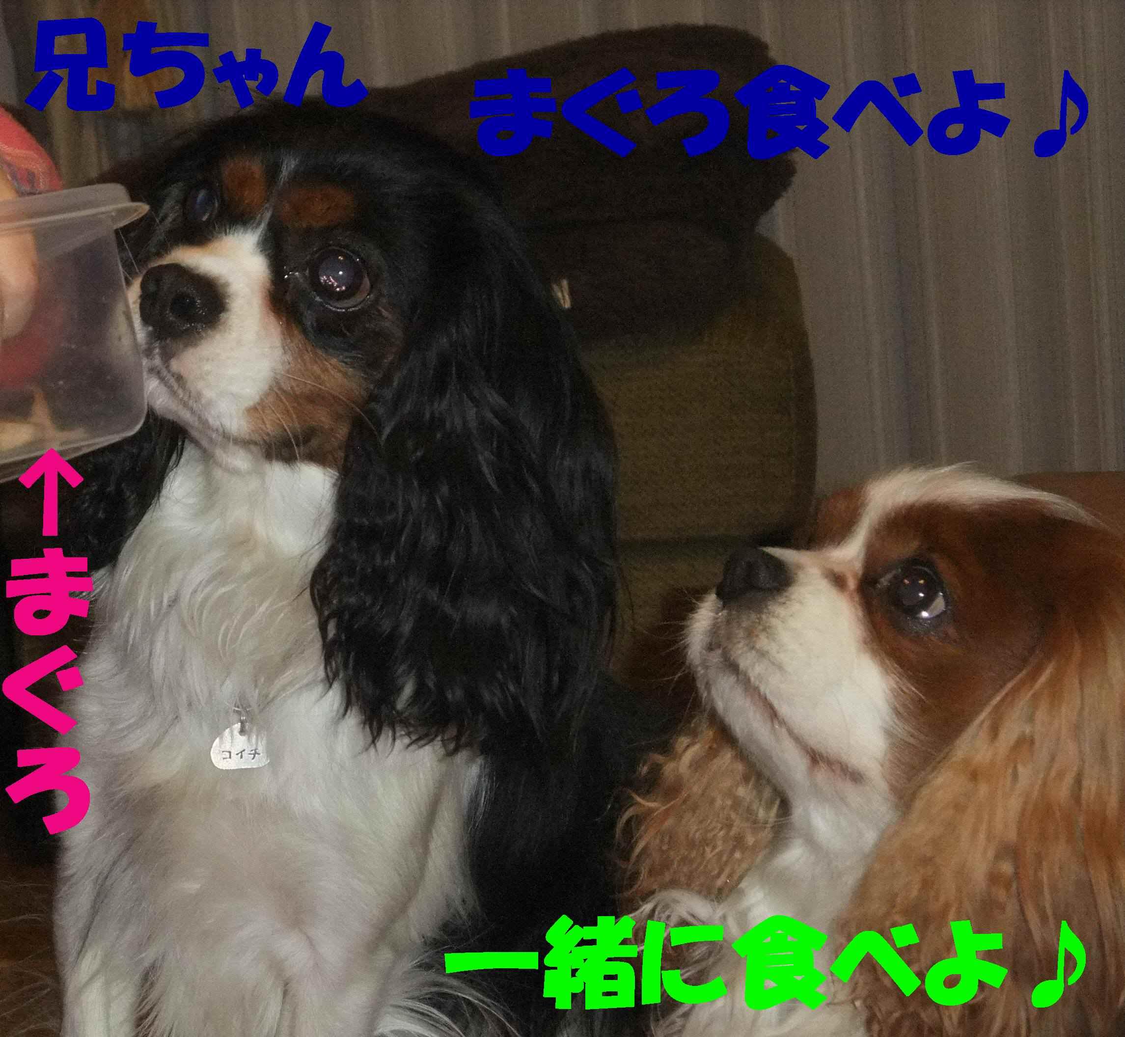 b0165139_20153844.jpg