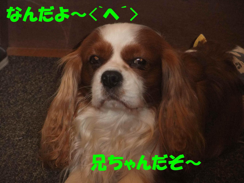 b0165139_20154132.jpg