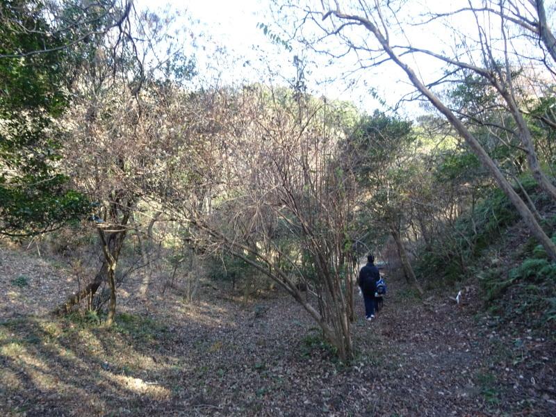 孝子の森へ孫たちと行ってきました_c0108460_19571730.jpg