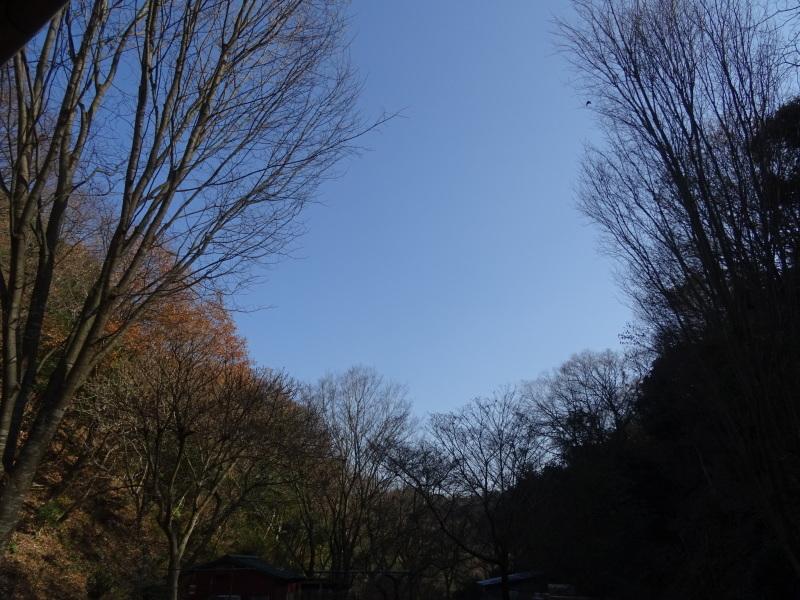 孝子の森へ孫たちと行ってきました_c0108460_20050903.jpg