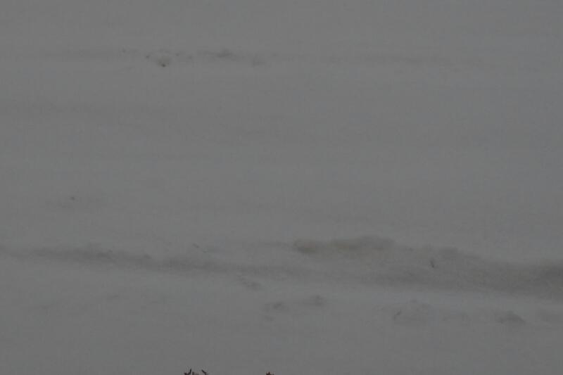 平成26年12月31日(水)大晦日の函館の朝_b0106766_7242714.jpg