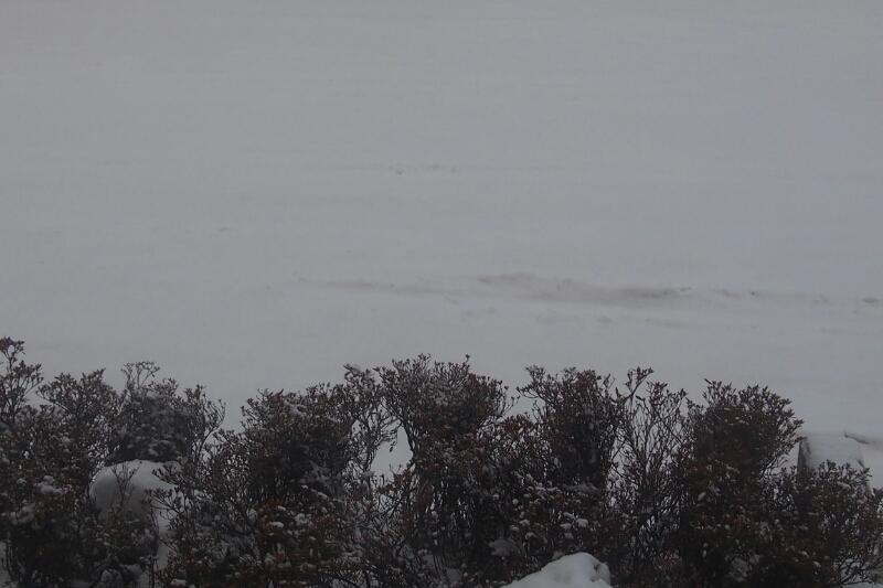平成26年12月31日(水)大晦日の函館の朝_b0106766_7245116.jpg