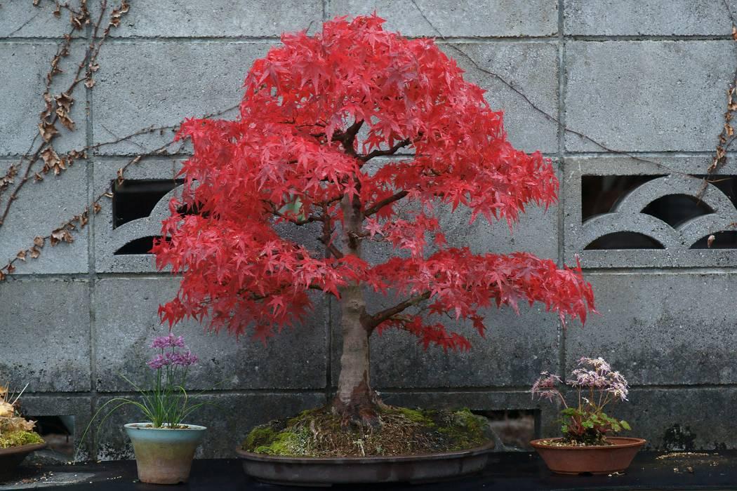 我家の盆栽_b0223668_933279.jpg