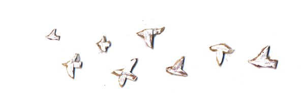 birds_c0154575_17194973.jpg