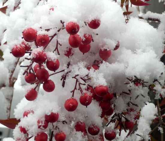 雪の元日_e0048413_15542577.jpg