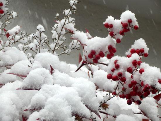 雪の元日_e0048413_15543913.jpg