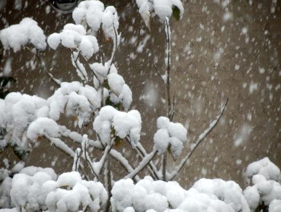 雪の元日_e0048413_1554585.jpg