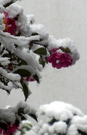 雪の元日_e0048413_1555082.jpg