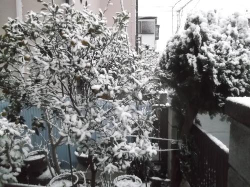 初雪で...モノトーンのお正月_b0137932_16580410.jpg