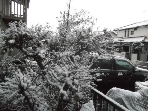 初雪で...モノトーンのお正月_b0137932_16581410.jpg