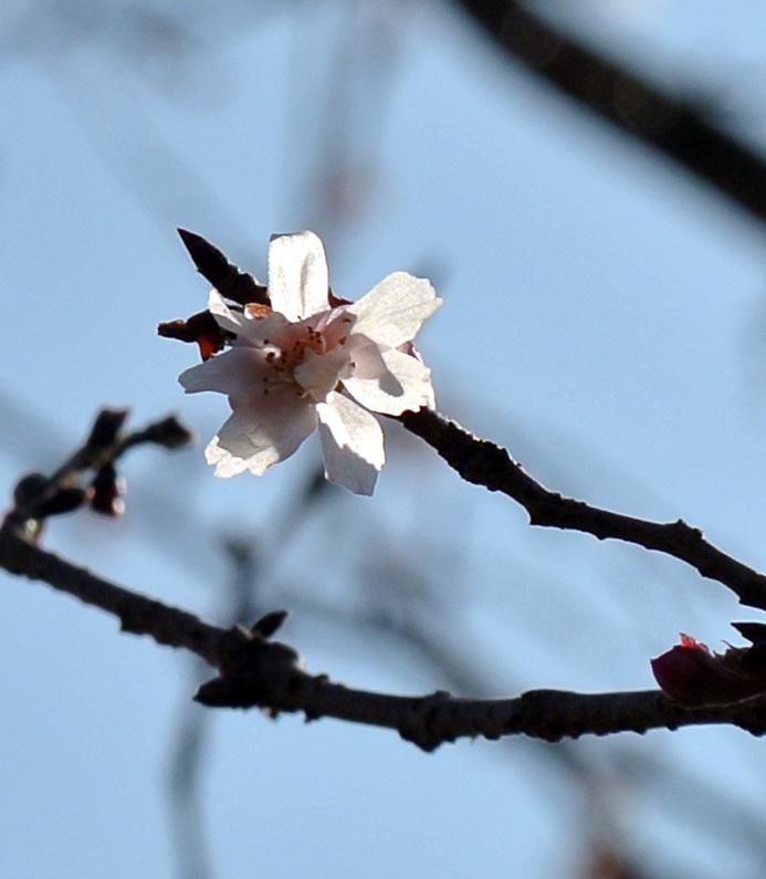 十月桜_e0089232_14592819.jpg