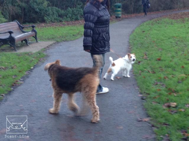 12月のイギリス旅 その2 (朝のお散歩と郊外観光)_c0099133_15414432.jpg