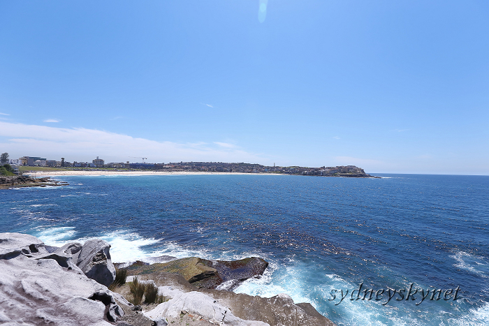真夏のシドニーから、あけまして!_f0084337_09105343.jpg