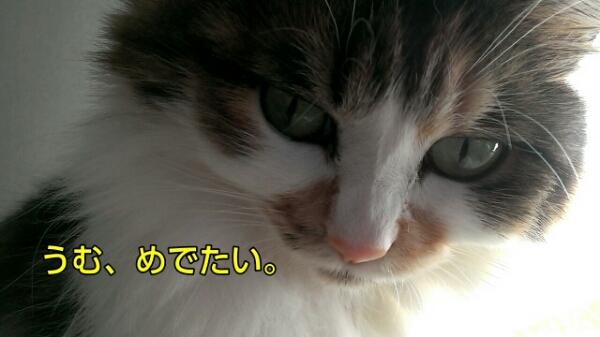 c0181639_038327.jpg