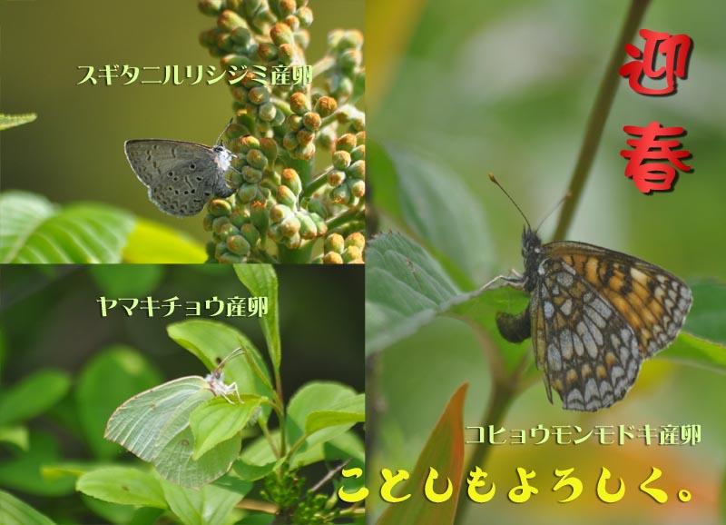 c0045352_7304913.jpg