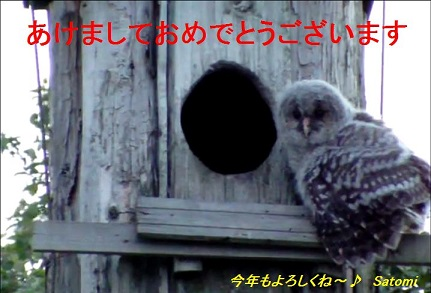 e0061461_16483282.jpg