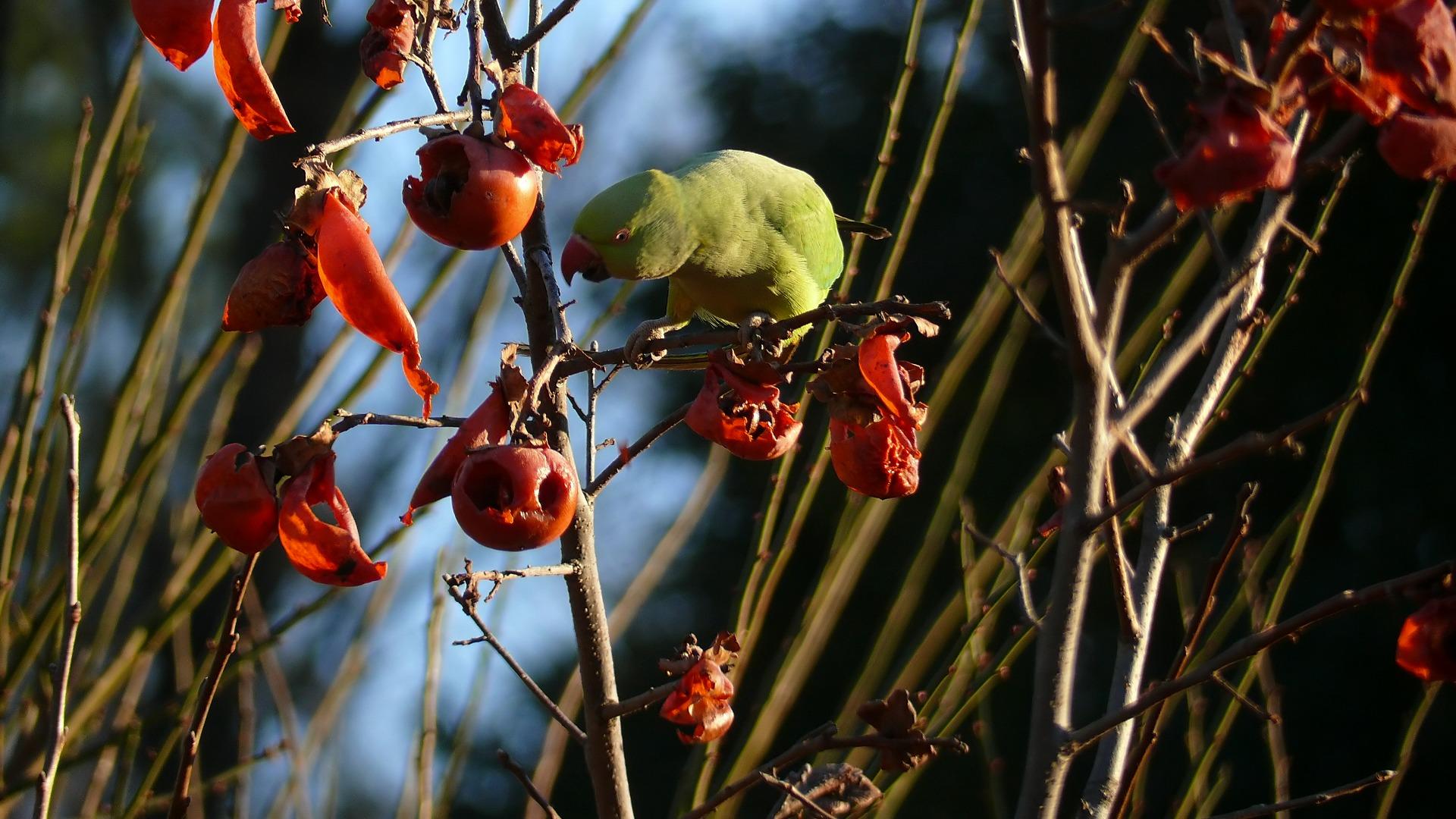 隣の客はよく柿食う客だ_a0185081_13491881.jpg