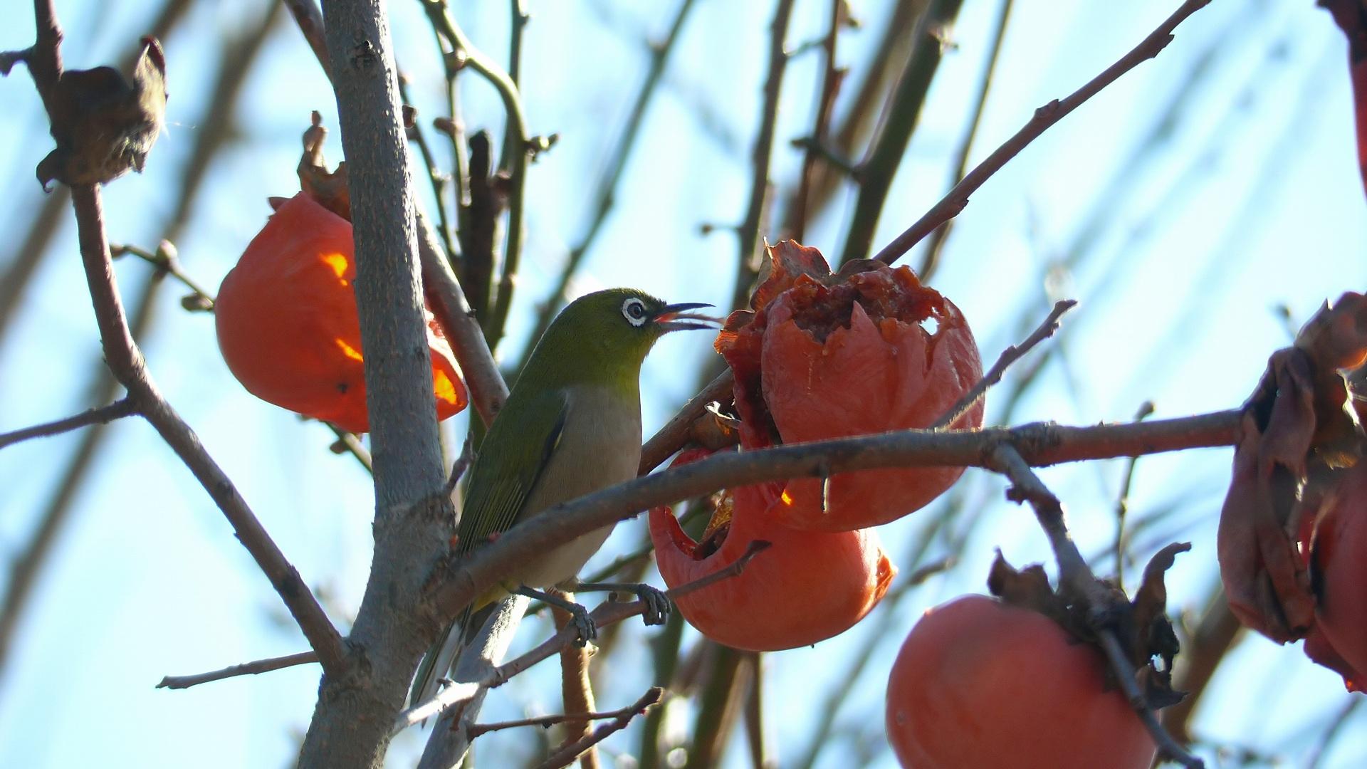 隣の客はよく柿食う客だ_a0185081_13502170.jpg