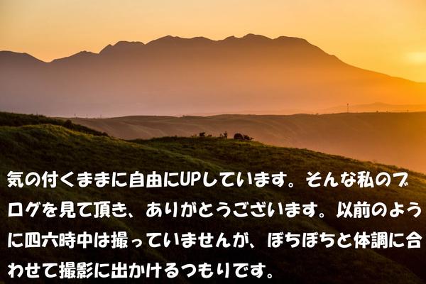 e0304485_0215964.jpg