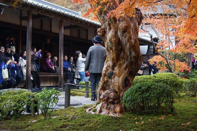 圓光寺・神社仏閣を訪ねる旅、圓光寺京都のお寺を訪ねる紅葉の美しさ_d0181492_15555427.jpg