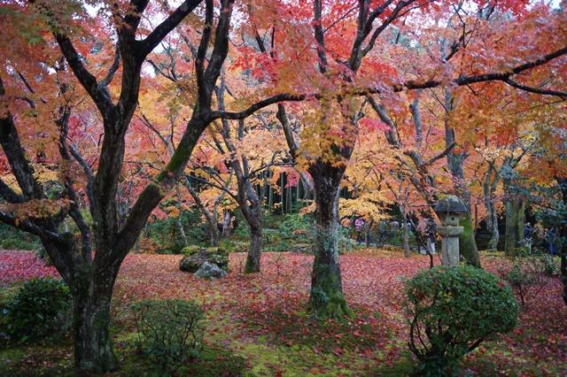 圓光寺・神社仏閣を訪ねる旅、圓光寺京都のお寺を訪ねる紅葉の美しさ_d0181492_1555879.jpg