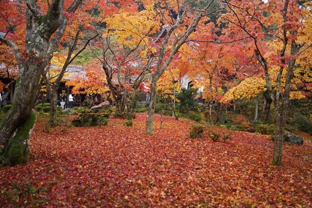 圓光寺・神社仏閣を訪ねる旅、圓光寺京都のお寺を訪ねる紅葉の美しさ_d0181492_15574160.jpg