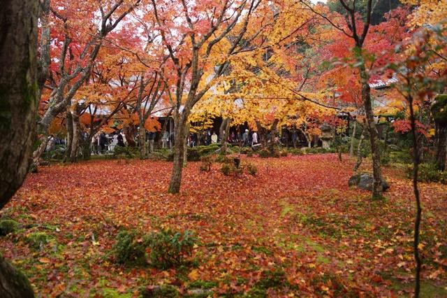 圓光寺・神社仏閣を訪ねる旅、圓光寺京都のお寺を訪ねる紅葉の美しさ_d0181492_15582321.jpg
