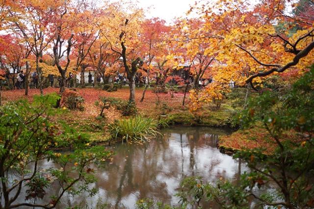 圓光寺・神社仏閣を訪ねる旅、圓光寺京都のお寺を訪ねる紅葉の美しさ_d0181492_15584286.jpg
