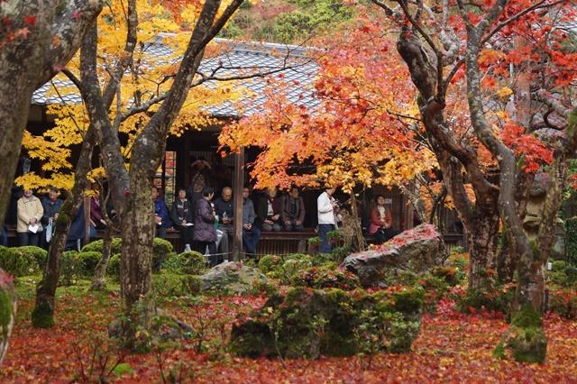 圓光寺・神社仏閣を訪ねる旅、圓光寺京都のお寺を訪ねる紅葉の美しさ_d0181492_1558467.jpg