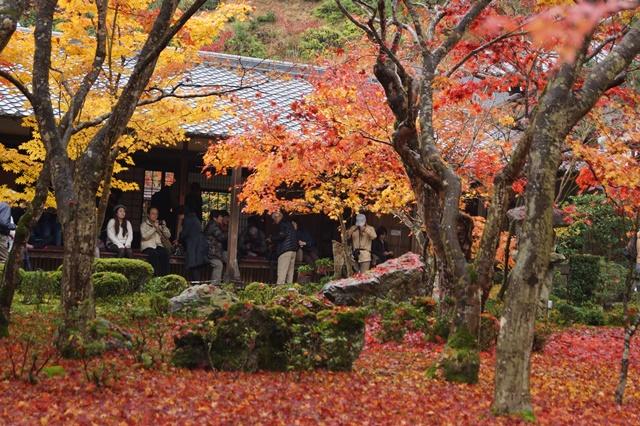 圓光寺・神社仏閣を訪ねる旅、圓光寺京都のお寺を訪ねる紅葉の美しさ_d0181492_1559498.jpg