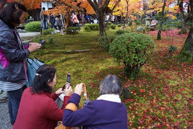 圓光寺・神社仏閣を訪ねる旅、圓光寺京都のお寺を訪ねる紅葉の美しさ_d0181492_160920.jpg