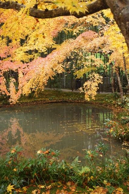 古都京都圓光寺の日本庭園美しさにびっくり、徳川家康縁のお寺京都・圓光寺_d0181492_16165969.jpg