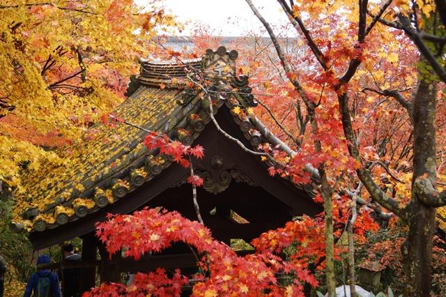 古都京都圓光寺の日本庭園美しさにびっくり、徳川家康縁のお寺京都・圓光寺_d0181492_16235626.jpg