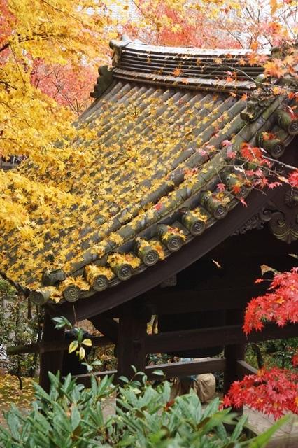 古都京都圓光寺の日本庭園美しさにびっくり、徳川家康縁のお寺京都・圓光寺_d0181492_16241360.jpg