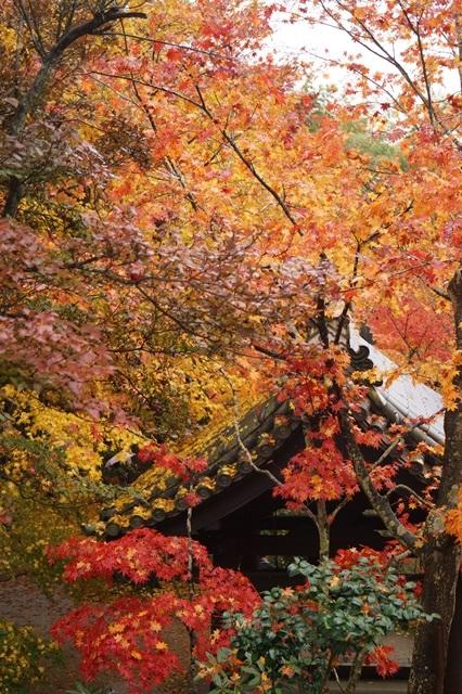 古都京都圓光寺の日本庭園美しさにびっくり、徳川家康縁のお寺京都・圓光寺_d0181492_16243012.jpg