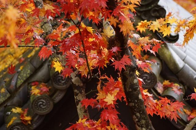 古都京都圓光寺の日本庭園美しさにびっくり、徳川家康縁のお寺京都・圓光寺_d0181492_16251154.jpg