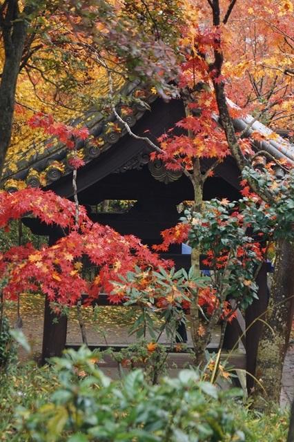 古都京都圓光寺の日本庭園美しさにびっくり、徳川家康縁のお寺京都・圓光寺_d0181492_16253184.jpg